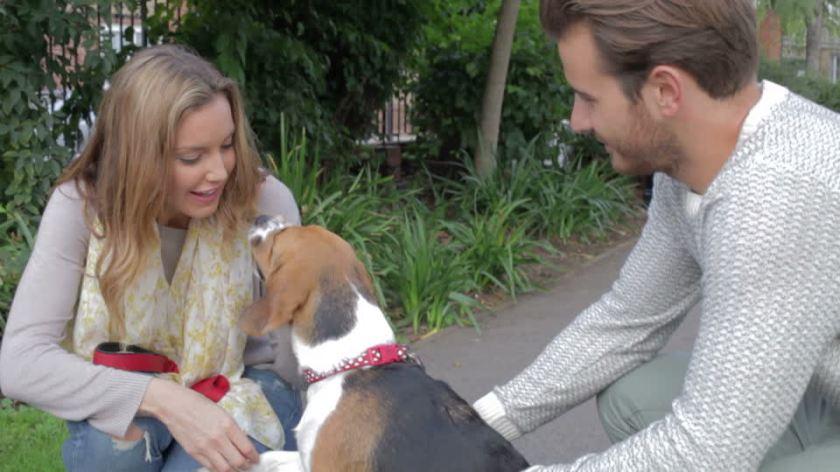 367332178-correa-para-el-perro-propietario-de-un-negocio-olfatear-pasear-al-perro